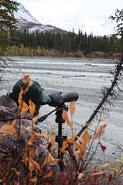 Sitting, waiting, and watching are a major part of hunting moose in Alaska, whether you are perched on a mountainside or glassing across a broad riverbed.