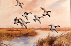 Canvasback Marsh by Roland Clark
