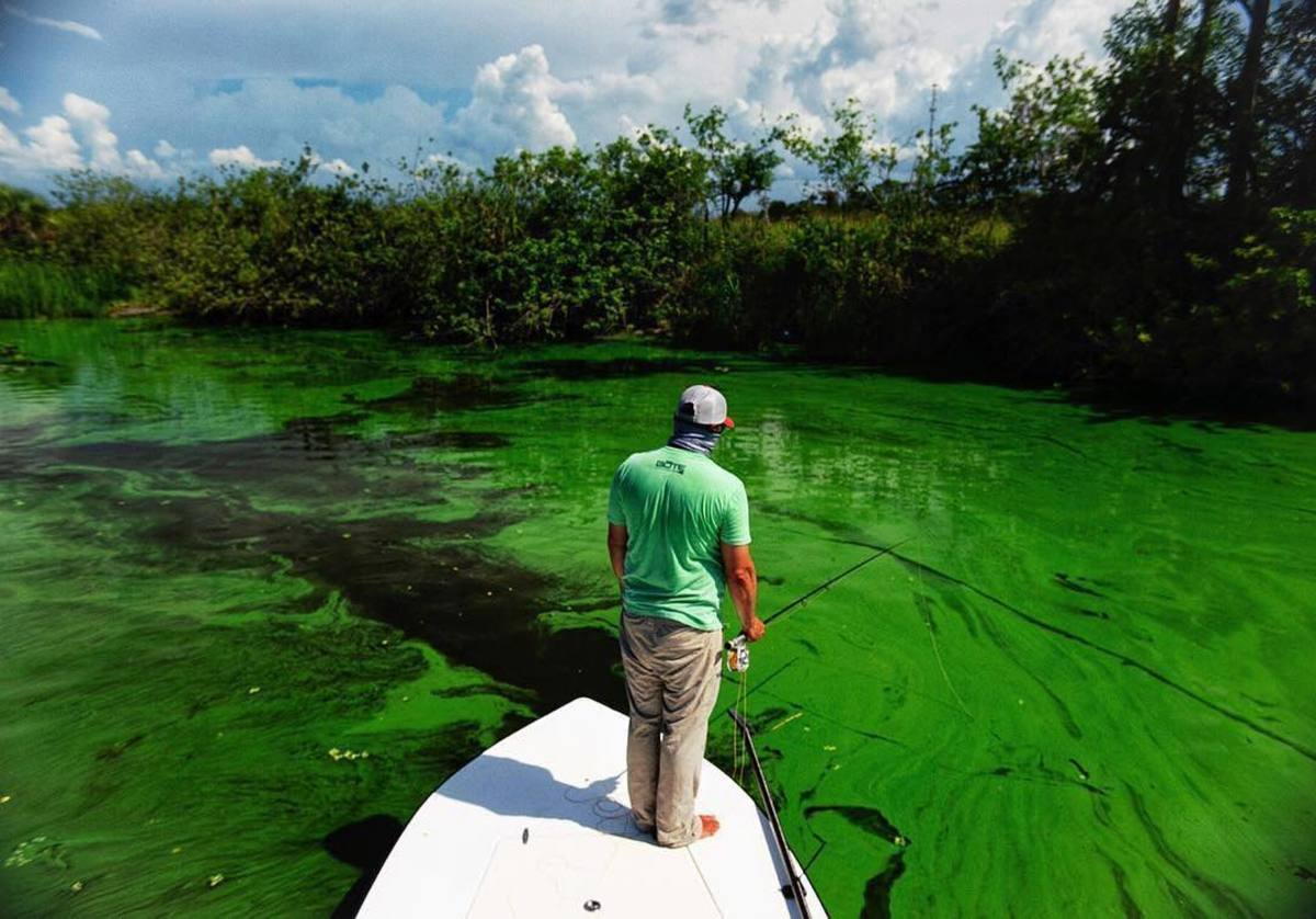 Urgent: Florida's Economy & Water Quality are at Risk!