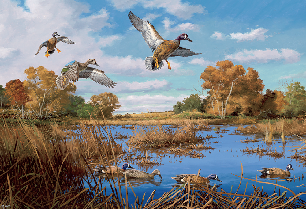 Blue-winged Rendezvous—Blue-winged Teal painting
