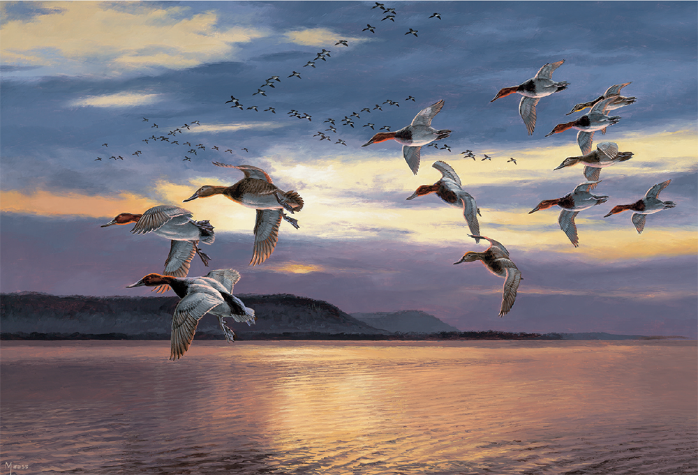 Daybreak at Lake Pepin—Canvasbacks painting