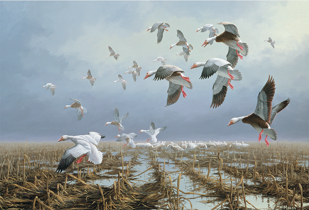 Low Ceiling—Snows and Blues duck painting