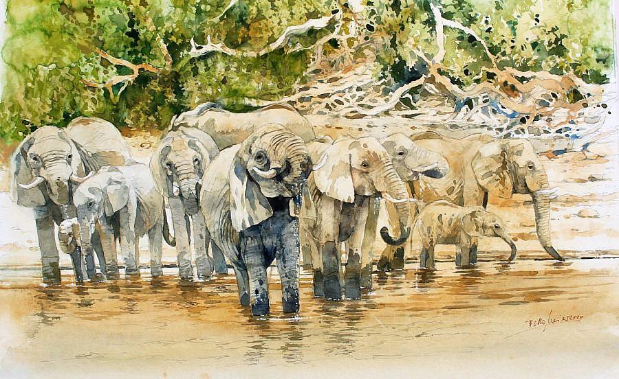 elephants drinking bodo meier