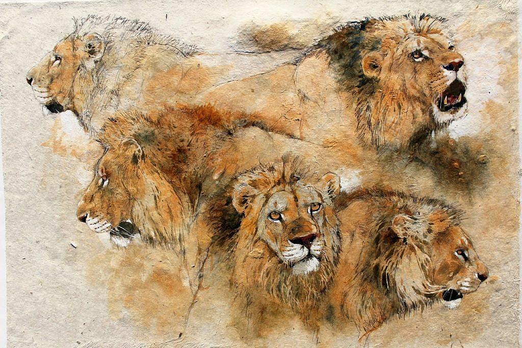 heads of lions bodo meier