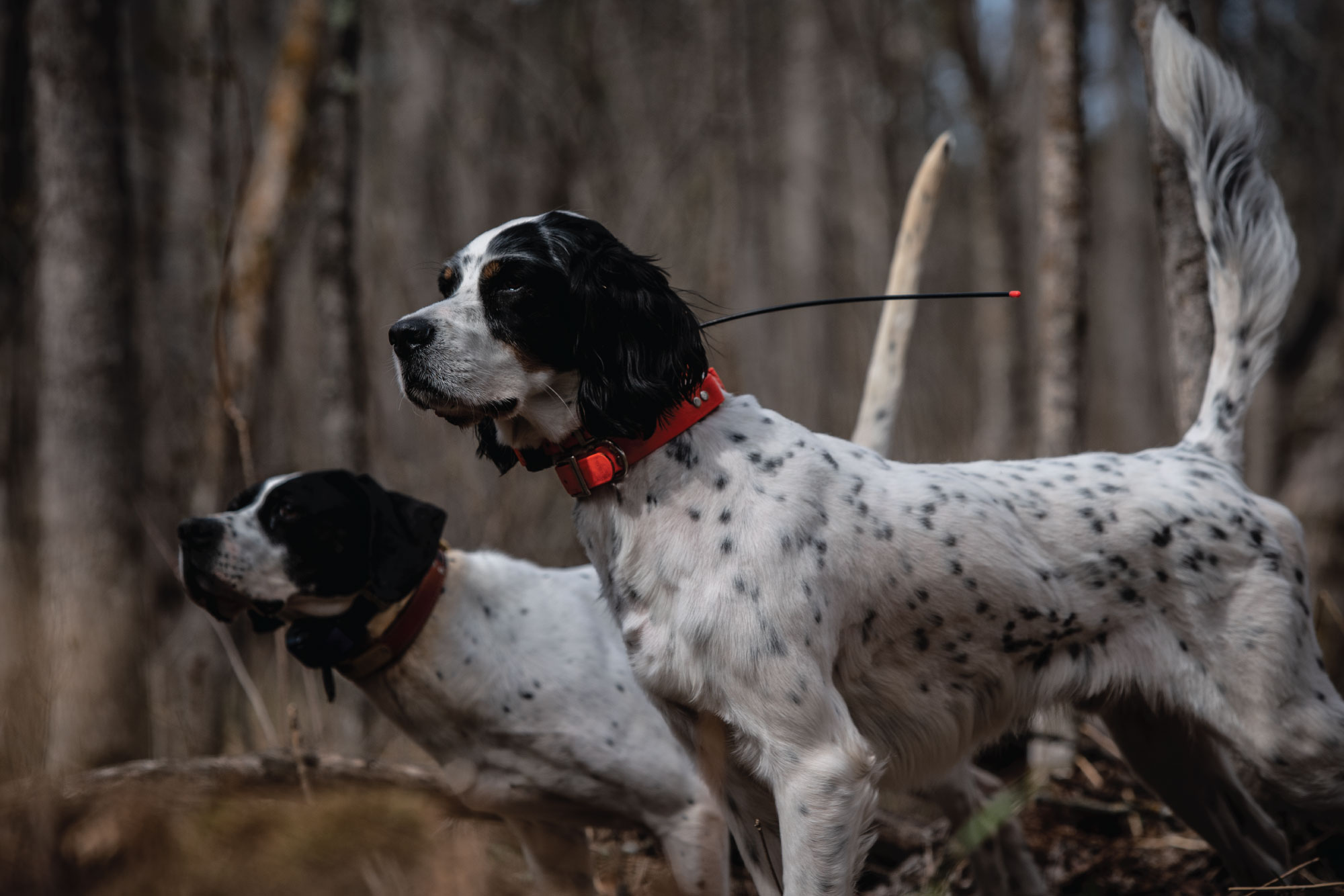 Exercise-Induced HRI: Does Your Dog Need Help?