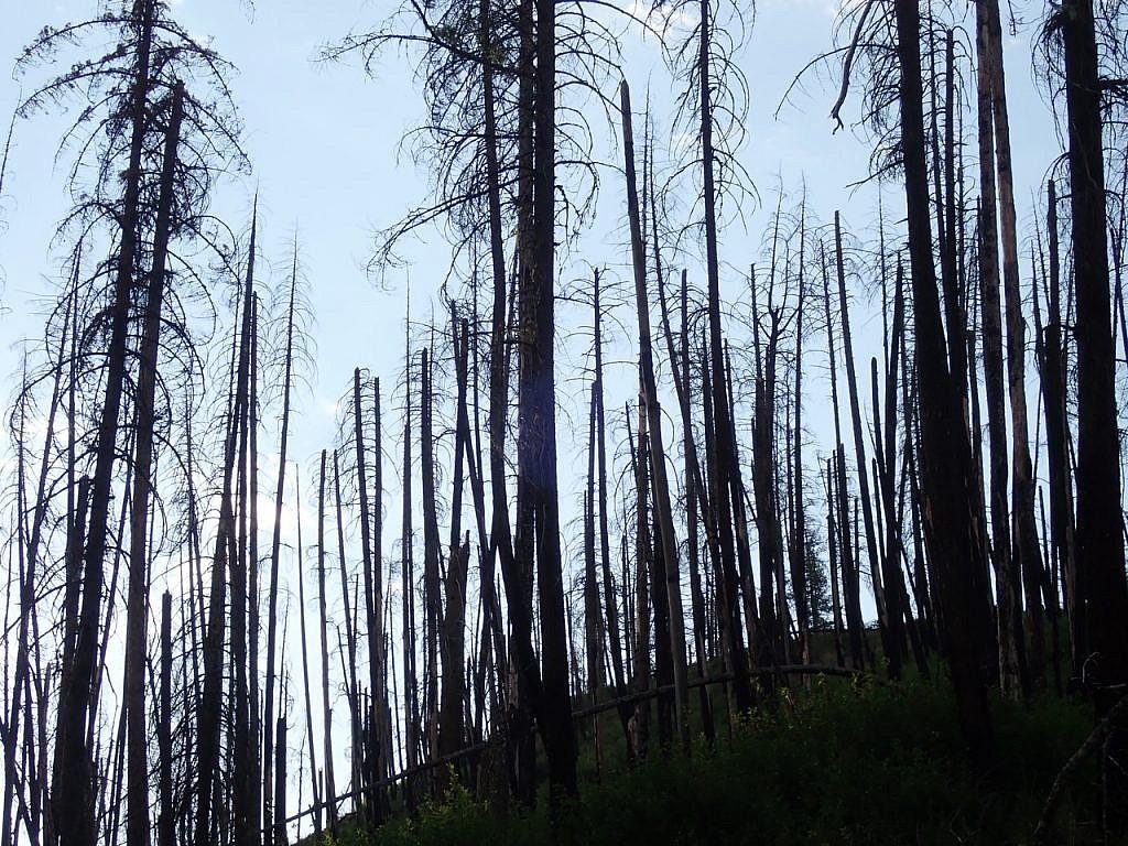 wilderness fires